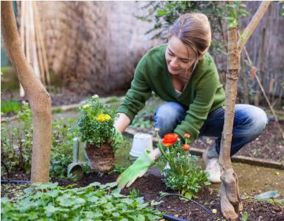 femme qui plante des fleurs dehors